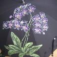 ピンクの胡蝶蘭の花(黒のパラソル)