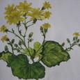 ツワブキの花(木綿のハンカチに描く 額装丁)