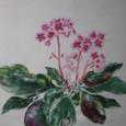 ヒマラヤゆきのしたの花(白地紬に描く 絹100%)