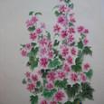 銭葵の花の絵 絹100%の羽二重に描く
