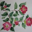 赤い藪椿の花(絹 額装丁)