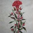 鶏頭の花 (白着物地 地模様付き 絹100%)