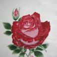 薔薇ハイブリッド・ティ・ローズの花の絵